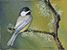 Black-capped Chickadee and Lichen horizontal